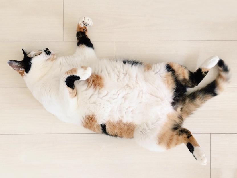 メンタルケア猫